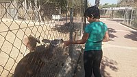 Visitors in Negev Zoo IMG 9041.jpg