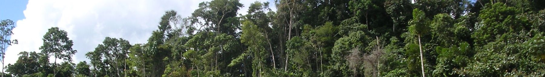 WV banner Pando department Tropical forest.jpg
