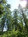 Waldreservat Plontabuora3.jpg
