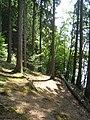 Waldweg - Aggertalsperre - geo.hlipp.de - 14922.jpg