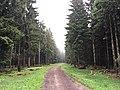 Waldweg nahe Masserberg, Thüringen, Deutschland 02.jpg