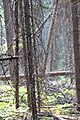 Wapta Falls Trail IMG 4935.JPG
