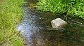 Waterloopbos. Natuurgebied van Natuurmonumenten. Bron van de Voorsterbeek 01.jpg