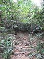 Way to Ranipuram Hill (1).jpg