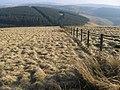 Wedder Dod - geograph.org.uk - 692015.jpg