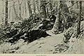 Western field (1907) (14598536018).jpg