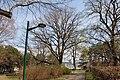 Wiener Naturdenkmal 827 - Baumhasel (Döbling) k.JPG