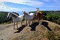 Wild Horses of Wales - panoramio (2).jpg