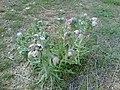 Wild flower9.jpg