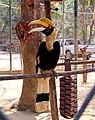 Wildlife Friends Foundation Thailand 4.jpg