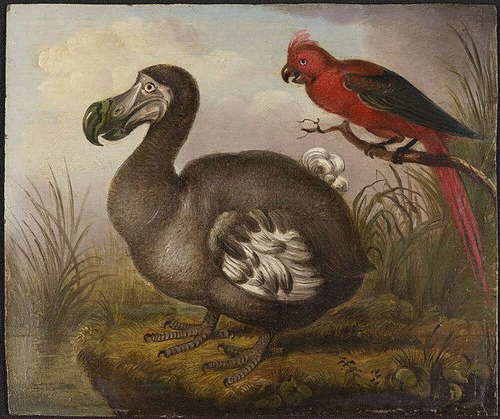 Archivo: William Hodges - Dodo y Parakeet.jpg Red