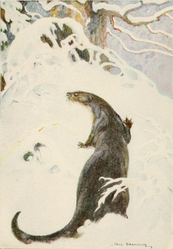 The Otter walks in the snow. Drawn by Paul Bransom.