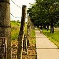 Wooden Pillars And Vegetation (253944859).jpeg