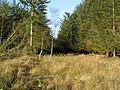 Woodland above Muirlands Farm - geograph.org.uk - 170663.jpg