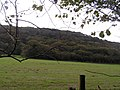 Woodland on Knowle Hill - geograph.org.uk - 268757.jpg