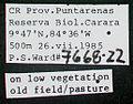 Xenomyrmex panamanus psw7668-22 label 1.jpg