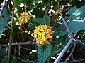 Yellowflowers2.jpg