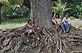 Zicht op wortels oude boom - Mariënburg - 20417972 - RCE.jpg