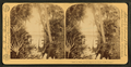 'And the palm tree nodded to the mirror in the jungle.', from Robert N. Dennis collection of stereoscopic views.png