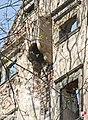 Świny, Zamek Świny - fotopolska.eu (102149).jpg