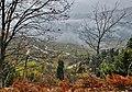Ασπροπόταμος- Ομίχλη στο δάσος.jpg