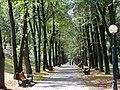 Аллеи парка Янки Купалы - panoramio.jpg