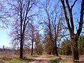 Аллея в парке - panoramio.jpg