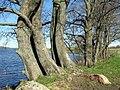 Берег озера Яново около деревни Бикульничи. Lakefront Yanovo - panoramio.jpg