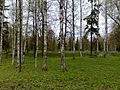 В Гатчине - panoramio.jpg
