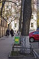 Група вікових дерев береки 02.jpg