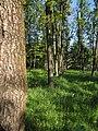 Дендрологічний парк, Довгинцівський район 07.JPG