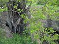 Дендрологічний парк 142.jpg