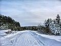 Дорога в Пошехонье - panoramio.jpg