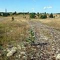 Здесь был поселок Парма - командировка Вишлага. - panoramio.jpg