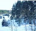 Зимой в лесу 3.jpg