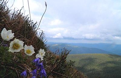 Карпатський національний природний парк (28).jpg