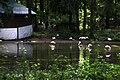 Київський зоопарк Фламінго IMG 3439.jpg