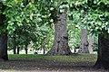 Лондон, Сент-Джеймсский парк - panoramio.jpg