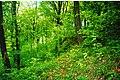 Лісовий масив Загорода.jpg