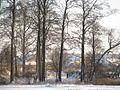 Ольховые деревья в ряд. Alder trees in a row. - panoramio.jpg