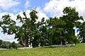 Парк Качанівка-парк.jpg