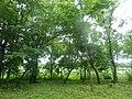 Парк ім. Т. Г. Шевченка, Прилуцький район, смт. Линовиця 74-241-5030 10.jpg
