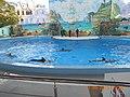 Сочинский дельфинарий парка «Ривьера» 14.jpg