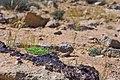 סלעי בזלת בהר רמון.jpg