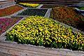 פרחים ברחבת היכל התרבות.jpg