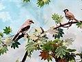 حیوانات تاکسی درمی شده - موزه تاریخ طبیعی شهر قم 06.jpg