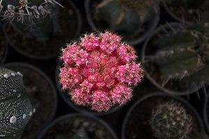 گونه های کاکتوس در گلخانه دنیای خار در قم 40.jpg