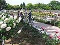 バラ園 - panoramio.jpg