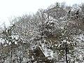 冬雪曲径 - panoramio.jpg