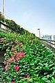 广州街景 - panoramio (1).jpg